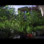 Garden as of 7/25