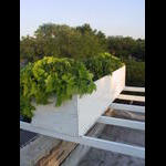 SE corner wall box with habs and cascading vines on 7/7.