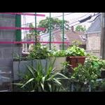 Morning glory planters for south veranda level trellis system