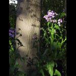 Dane's rocket blooms front parkway