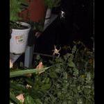 A spider sets up shop around catnip corner